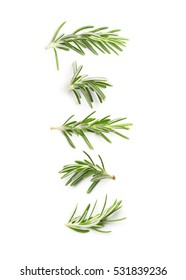 Rosemary twig top view on a white background