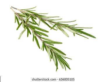 Rosemary twigs on a white background
