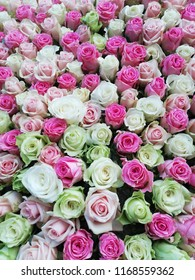 Roses Background. Colorful roses background wallpaper