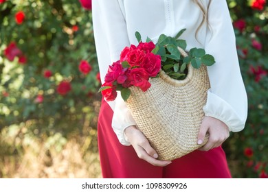 Roses in basket. Beautiful bush of red roses in a spring garden. Rose garden. red roses bush. Spring time.