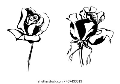 Black And White Line Drawing Flower : Lilly biro line drawing