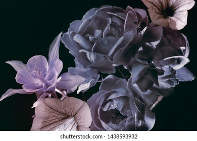 roses with blue petals, garden flowers on a dark background, abstract floral arrangement.