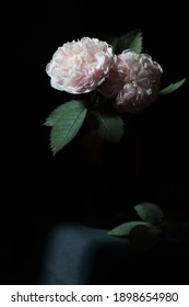 Roses bouquet isolated on black background, dark moody floral composition in baroque artistic rembrandt lighting style, fine art design