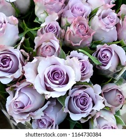 Roses bouquet, light purple buds, pastel color floral background