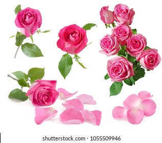 Roses bunch, one rose, petals set isolated on white background
