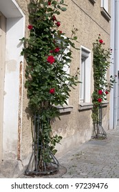 Roses bush near traditional house, Bavaria, Germany