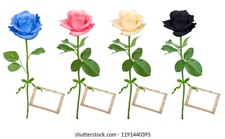 Roses with card isolated on a white background