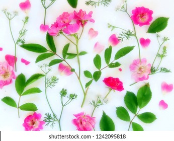 Roses and Cilantro