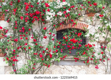 Roses climbing up white wall