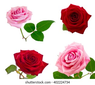 Roses collection isolated on white background.