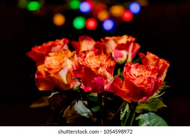Roses in the dark - with a colourful bokeh in the background