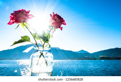roses in front of the tegernsee lake - bavaria - germany