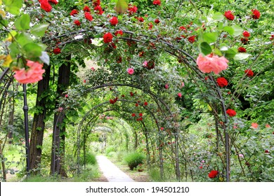 Rose Garden Images Stock Photos Vectors Shutterstock