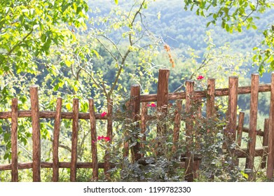 Roses in the garden and a wooden fence (Marche, Italy, Europe)