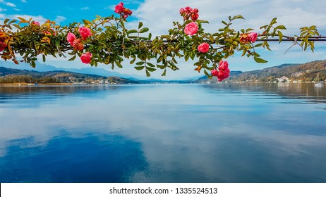 Roses girland hanging at the pier by Wörtersee, Pörtschach, Austria. Beautiful lake landscape, surrounded by Alps. This lake is natural drinking water tank. Love is in the air. Romantic moments.