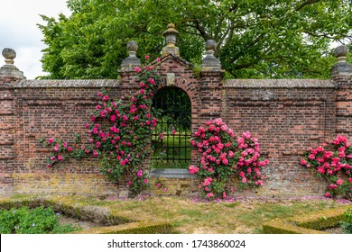 Roses growing along side a brick wall  with an closed iron gate in the garden next to the Eijsden Castle