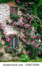 Roses at old stone house