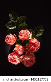 roses on the black background