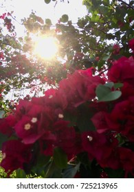 Roses on the Sun