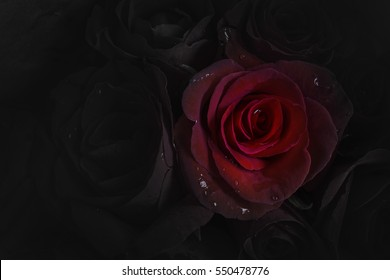 Imágenes Fotos De Stock Y Vectores Sobre Dark Rose