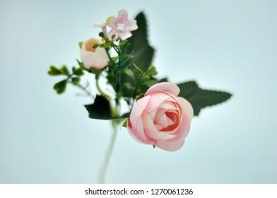 Roses Pink Four Seasons Roses