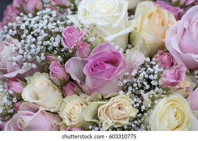 Roses in pink and white