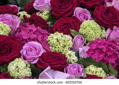 Roses in red and pink
