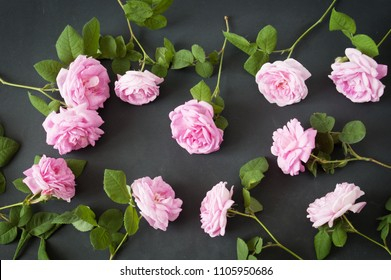 roses set on black background