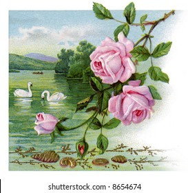 Roses and swans - a 1917 vintage greeting card illustration