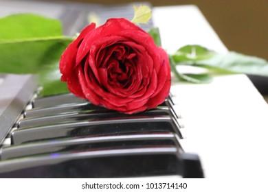 Roses, Valentine, Valentine's day, red rose, Rose, Valentine Gift
