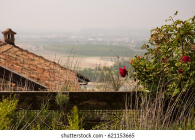 Roses and a view, seen from the foot of the tower of the Barbaresco village in Italy.