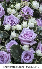 Roses in white and purple