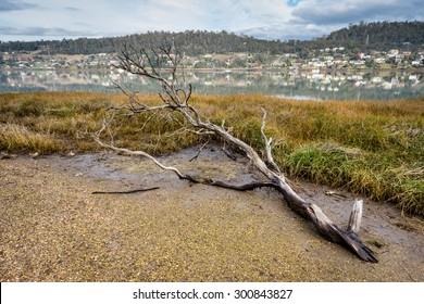 Rosevears on the Tamar River, near Launceston, Tasmania, Australia from Native Point Reserve. Dead tree branch in foreground.