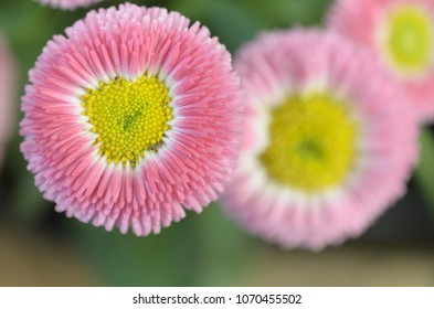 Yellow flower with red center images stock photos vectors a rosy pink flower with a yellow center mightylinksfo Image collections