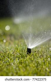 Rotating sprinkler head dispersing water on grass