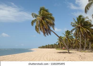 Roteiro, Alagoas / Brazil - 09/11/2015: Gunga Beach - South Coast of Alagoas