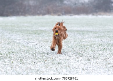 Dog Running In Snow Stock Photos, Images & Photography | Shutterstock