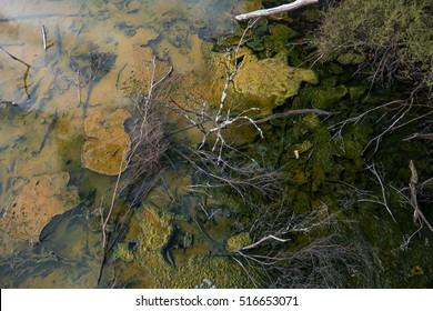 Rotorua Hot Springs (Kuirau Park) steamy lake - Shutterstock ID 516653071