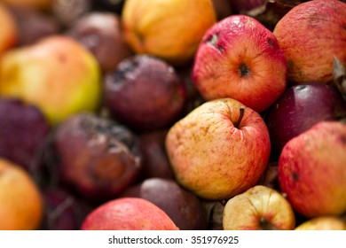 Rotten apples on a stack