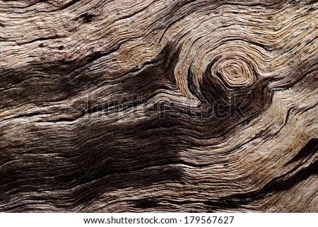 rotten driftwood の写真素材 今すぐ編集 179567627 shutterstock