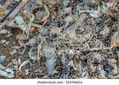 rotten fish  shell and crab