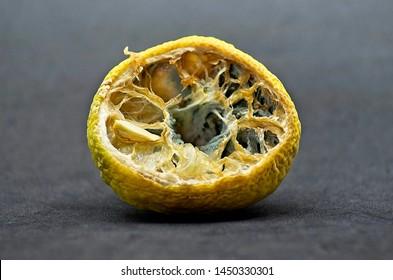 Imágenes, fotos de stock y vectores sobre Frutas Podridas