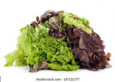 Rotten lettuce on white background