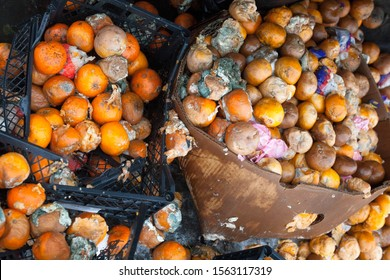 Rotten mandarin oranges on the landfill. Spoilt citrus products. Rotten tropical fruit. Pile of garbage.