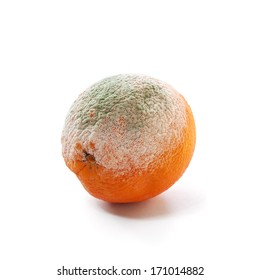 rotten and moldy orange