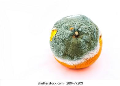rotten and moldy orange