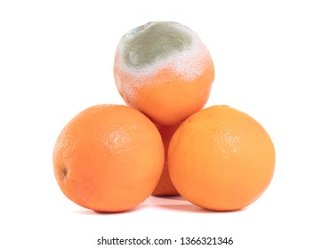 Rotten orange isolated on a white background