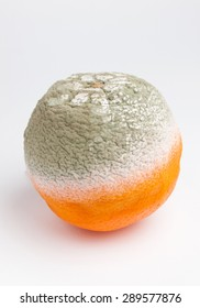 Rotten orange isolated on white background in a studio shot