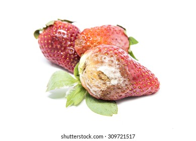 Rotten strawberries isolated on white background