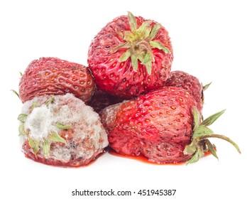 Rotten strawberry isolated on white background. Moldy fruits